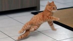 animale dansatoare pisica dansatoare 2